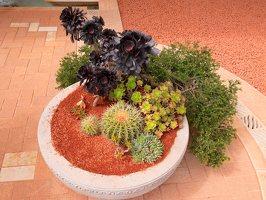 Bahai Gardens in Haifa P1030498
