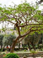Bahai Gardens in Haifa P1030519