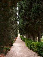 Bahai Gardens in Haifa P1030520