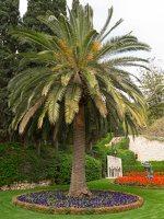 Bahai Gardens in Haifa P1030529