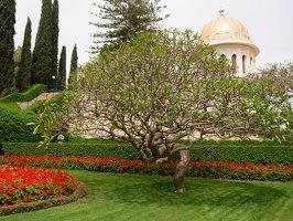 Bahai Gardens in Haifa P1030531
