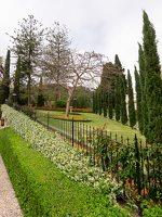 Bahai Gardens in Haifa P1030537