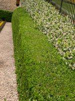 Bahai Gardens in Haifa P1030538