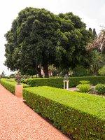 Bahai Gardens in Haifa P1030555