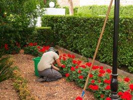 Bahai Gardens in Haifa P1030556