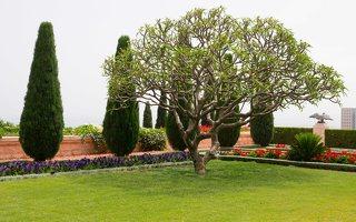 Bahai Gardens in Haifa P1030558