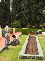 Bahai Gardens in Haifa P1030559