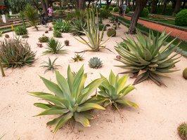 Bahai Gardens in Haifa P1030567