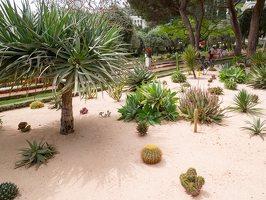 Bahai Gardens in Haifa P1030568