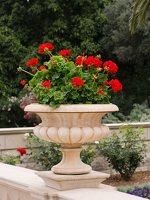 Bahai Gardens in Haifa P1030637
