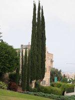 Bahai Gardens in Haifa P1030650