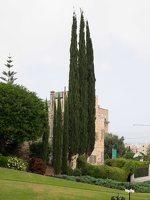 Bahai Gardens in Haifa P1030651