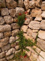 Jerusalem · Pools of Bethesda P1040184