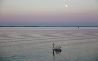 Juodkrantė · marios, mėnulis, gulbė 4773