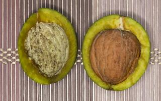 Juglandaceae · riešutmediniai