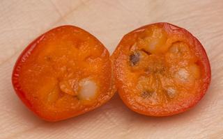 Convallaria majalis fruit · paprastoji pakalnutė, vaisius