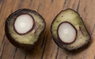 Ligustrum vulgare berry · paprastasis ligustras, uoga