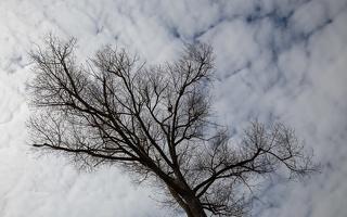 Juodkrantė · medis, debesys
