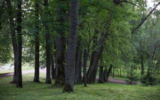 Alantos dvaro parkas 8602