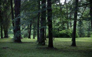 Alantos dvaro parkas 8606