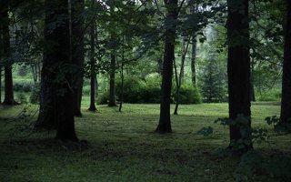 Alantos dvaro parkas 8607