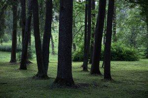 Alantos dvaro parkas 8608