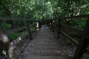 Kadagių slėnis · pažintinis takas, laiptai link Nemuno 8442