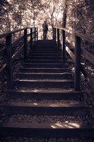 Kadagių slėnis · pažintinis takas, laiptai link Nemuno 8444