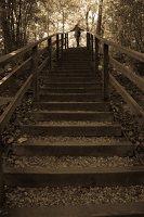 Kadagių slėnis · pažintinis takas, laiptai link Nemuno 8446