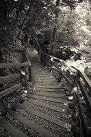 Kadagių slėnis · pažintinis takas, laiptai link Nemuno 8448