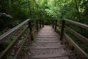 Kadagių slėnis · pažintinis takas, laiptai link Nemuno 8450