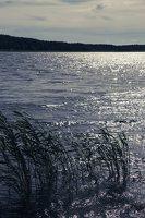 Kadagių slėnis · Nemuno krantas 8464