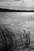 Kadagių slėnis · Nemuno krantas 8464-2