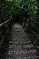 Kadagių slėnis · pažintinis takas, laiptai link Nemuno 8495