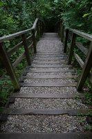 Kadagių slėnis · pažintinis takas, laiptai link Nemuno 8500