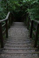 Kadagių slėnis · pažintinis takas, laiptai link Nemuno 8501