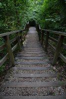 Kadagių slėnis · pažintinis takas, laiptai link Nemuno 8505