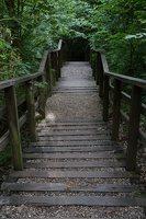 Kadagių slėnis · pažintinis takas, laiptai link Nemuno 8507