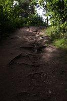 Kadagių slėnis · pažintinis takas, žemyn link Nemuno 8509