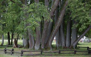 Sirvėtos parkas · Šventos dvarvietės liepų pavėsinė 9095