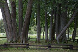 Sirvėtos parkas · Šventos dvarvietės liepų pavėsinė 9096