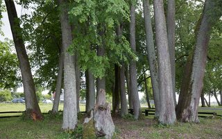 Sirvėtos parkas · Šventos dvarvietės liepų pavėsinė 9101