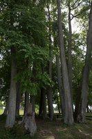 Sirvėtos parkas · Šventos dvarvietės liepų pavėsinė 9102