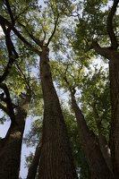 Sirvėtos parkas · Šventos dvarvietės liepų pavėsinė 9119
