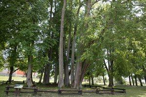 Sirvėtos parkas · Šventos dvarvietės liepų pavėsinė 9129
