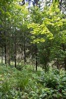 Sirvėtos regioninis parkas · Šventos mitologinis takas 9207