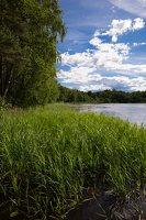 Sirvėtos regioninis parkas · ežeras Ilgys 9254