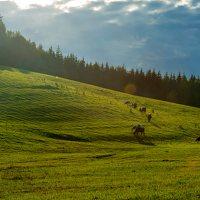 Sirvėtos regioninis parkas 9301