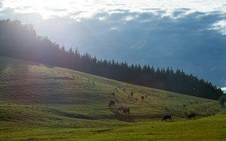Sirvėtos regioninis parkas 9303