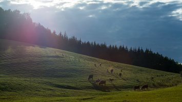 Sirvėtos regioninis parkas 9304